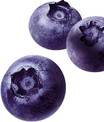 blueberry small